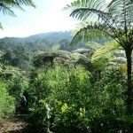 Suche nach pflanzlichen Wirkstoffen  GROSSE ARTENVIELFALT – VIELE HEILPFLANZEN